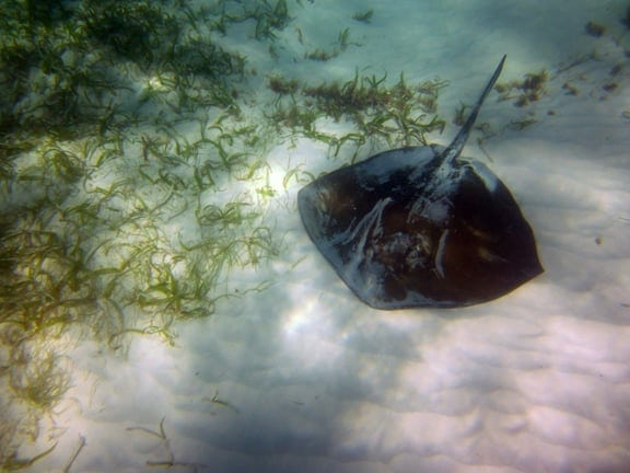 stingray swim punta cana