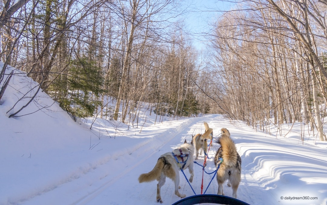 Haliburton Winter Getaway and Dream Dogsledding in Ontario