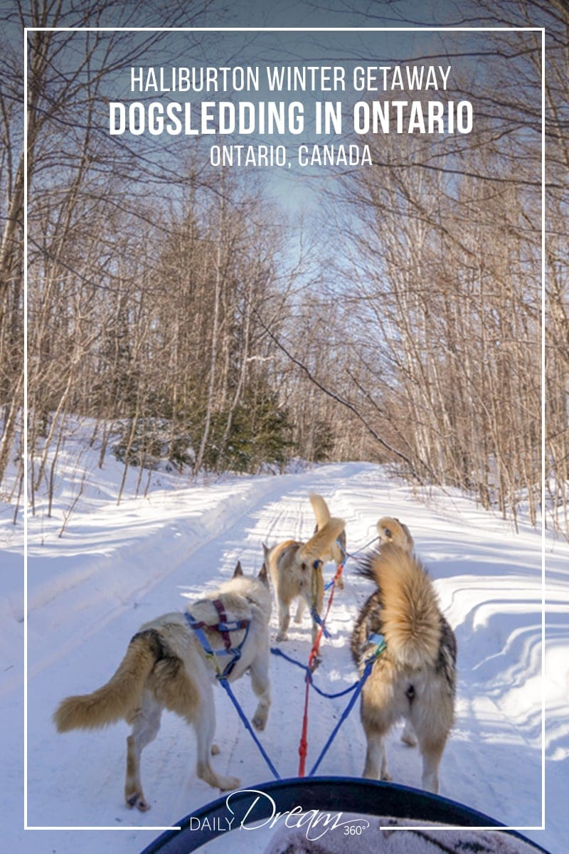 Dogs pulling sled over snow in forest