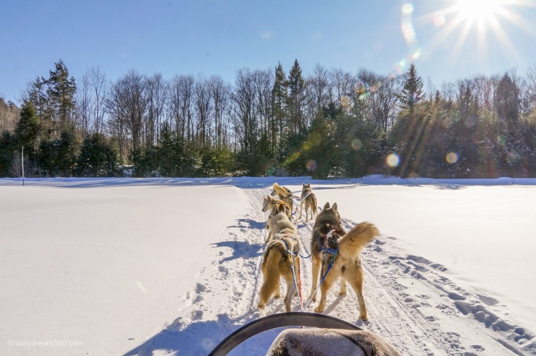 In the passenger seat of a dog sled on a sunny winter day
