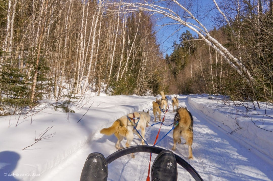 Sitting in dog sled view over boots as dog pull sled through forest
