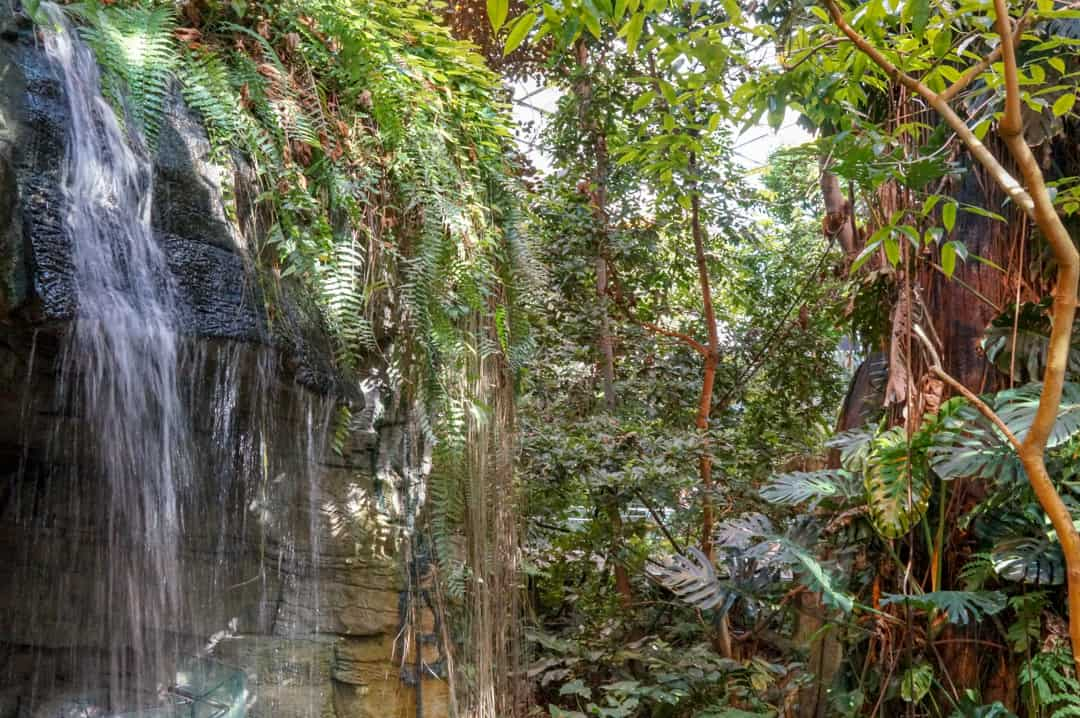 Entering the Tropical Rainforest at the Biodome in Montreal