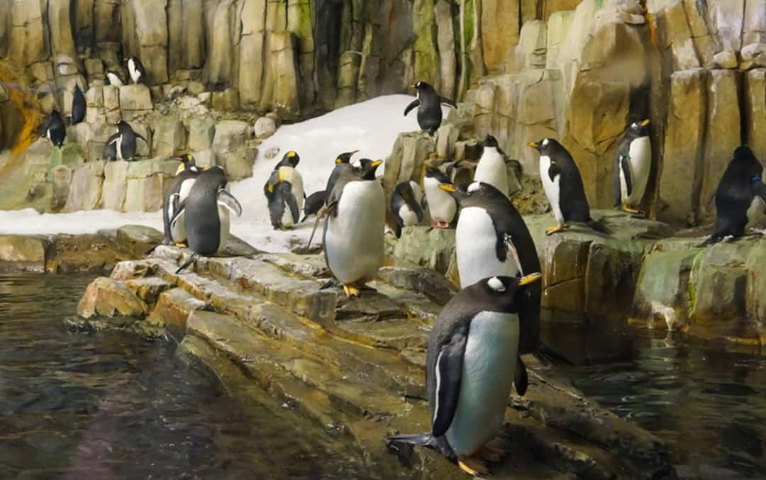 Escape to New Worlds in the Biodome Montreal