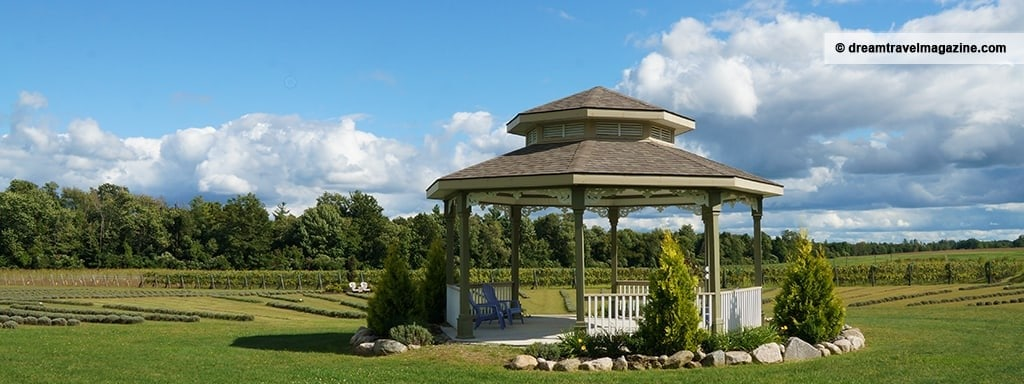 Lavender-Love-Norfolk-County-Ontario_featured