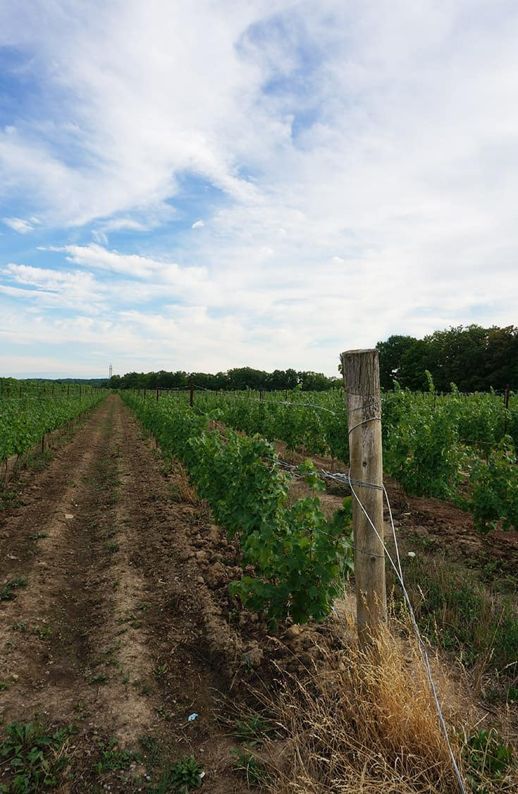 The Search for Jordan Ontario Uncovers the Beauty of Twenty Valley wine region in Ontario. A trip to sit on the deck at Creekside Winery is a must. | #winery #niagara #twentyvalley #ontario |