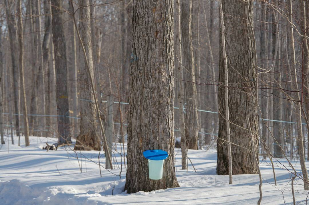 Follow the Tap Into Maple trail on a road trip through Ontario's Lake Country. Visit Ontario maple syrup producers, and businesses inspired by maple syrup season.