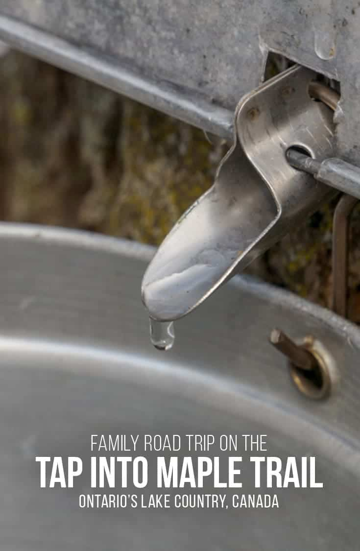 Follow the Tap Into Maple trail on a road trip through Ontario's Lake Country. Visit Ontario maple syrup producers, and businesses inspired by maple syrup season. | Maple Syrup | Ontario | Canada | Family Fun | Road trip |
