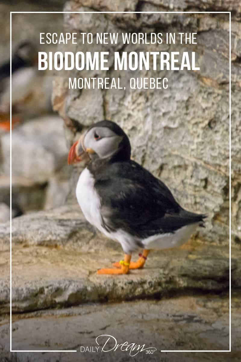 Escape to new worlds in Montreal's popular family attraction the Biodome. In this post, we share what you need to know and give you a sneak peek at what you will see inside.   #Montreal #attraction #animals #familyfriendly  