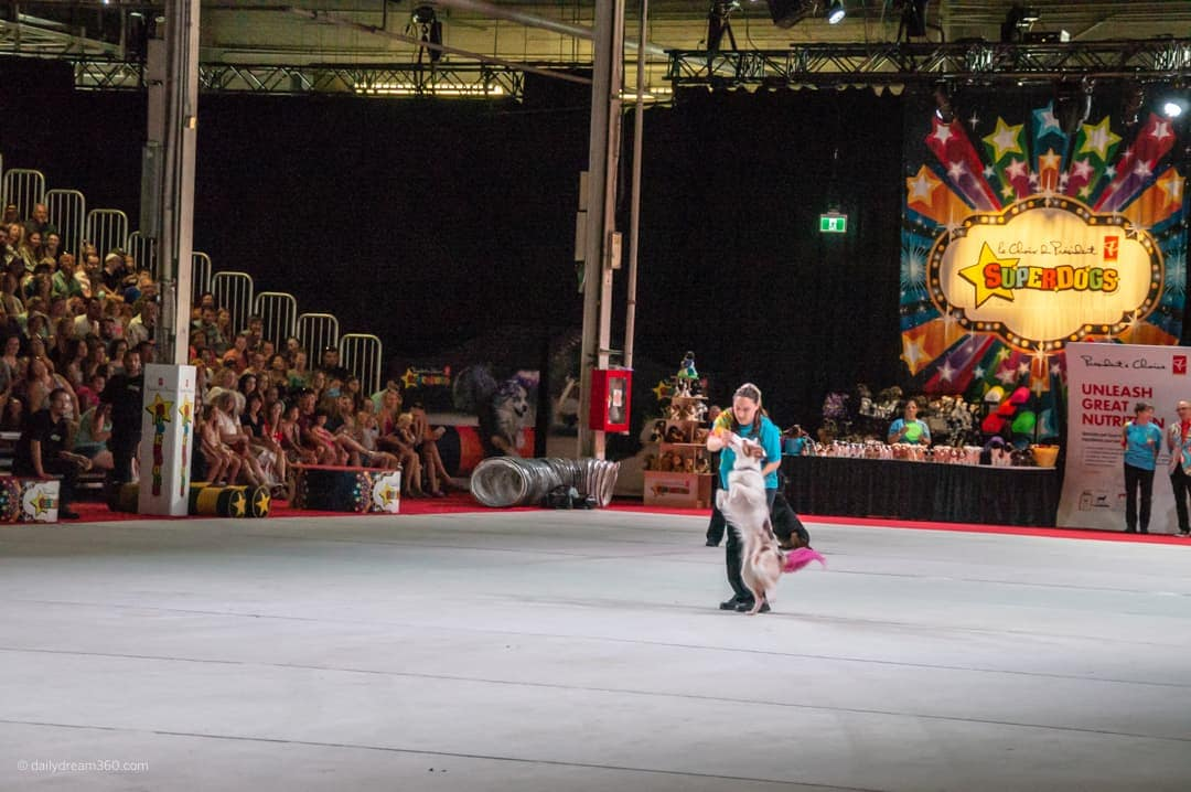 super dog performing during show at CNE