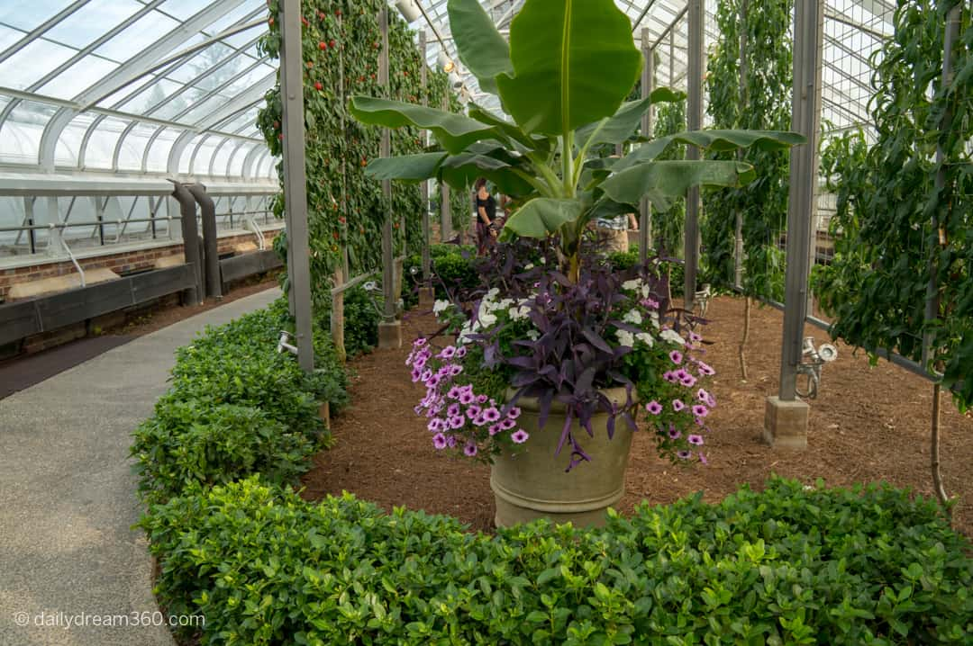 Inside greenhouse display with tropical flowers at Longwood Gardens
