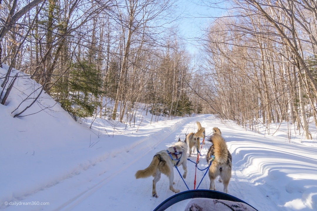 Winter dog sledding Ontario