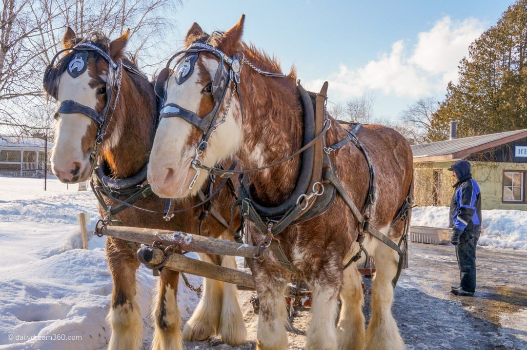 Horse drawn sleigh ride at The Briars Resort and Spa Ontario