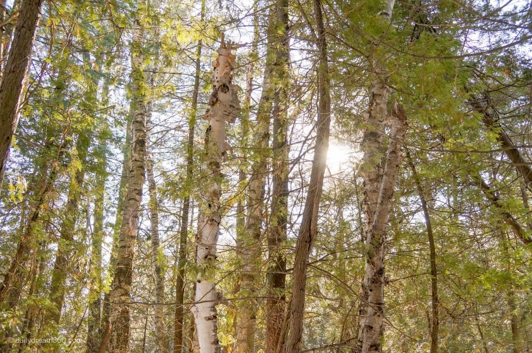 Sun shining through trees in forest surrounding at The Briars Resort and Spa