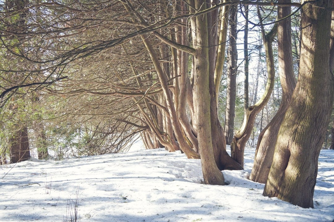 Trees lined up on trails at The Briars Resort and Spa Ontario