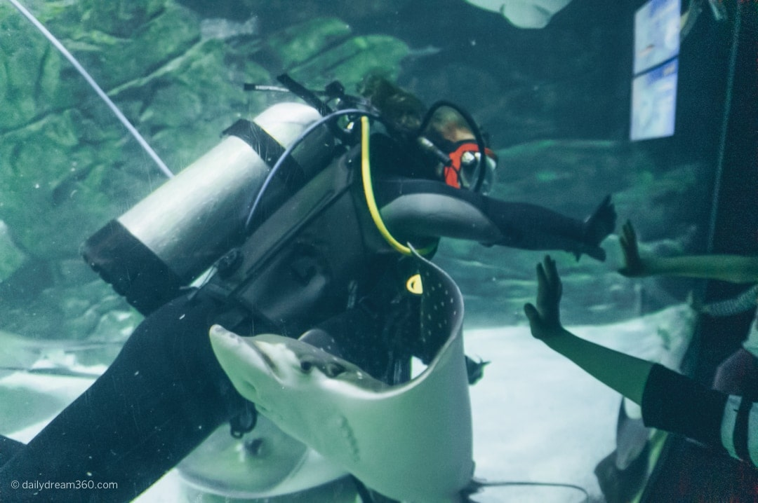 Ripley's diver giving high fives through glass