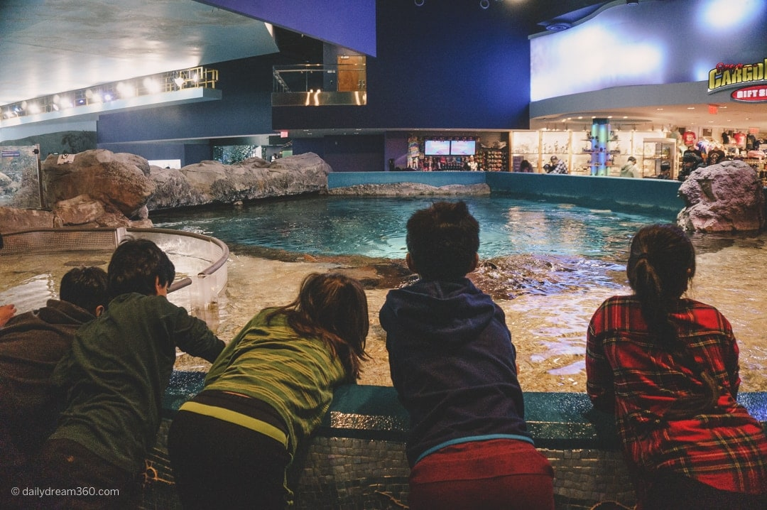 Children leaning over tank to touch stingrays at Ripley's Toronto