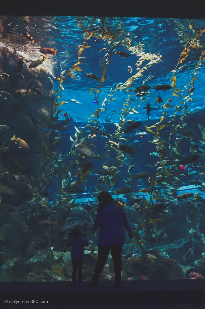 Tall Pacific Kelp tank with girl and lady standing in front