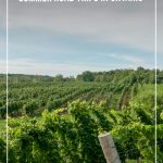 Vineyard with text: Destinations for Summer Road Trips in Ontario