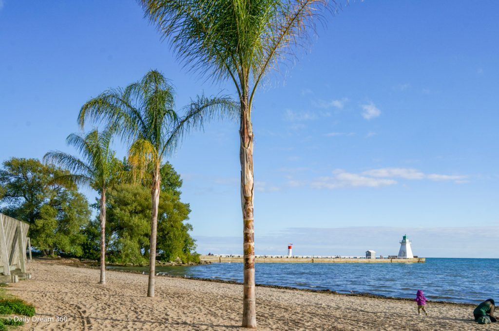 Palm Trees on the beach in Port Dover Ontario Canada