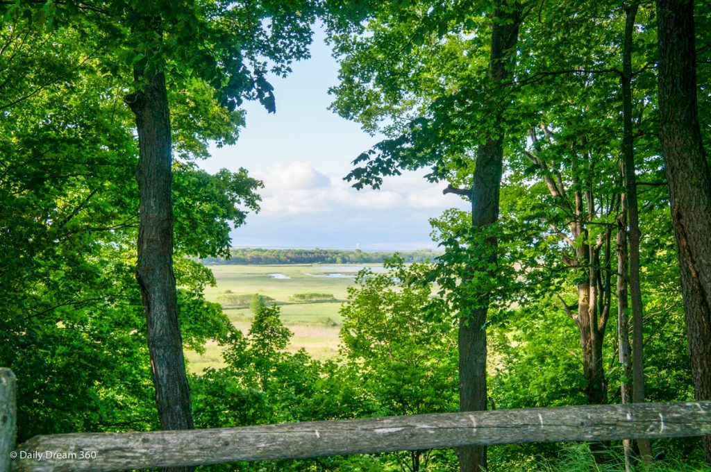 View of marsh on trail at Long Point Eco-Adventures Ontario