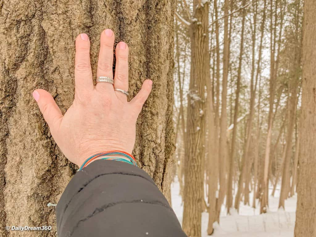 Forest Bathing Walk at the Hive Centre Orno Ontario