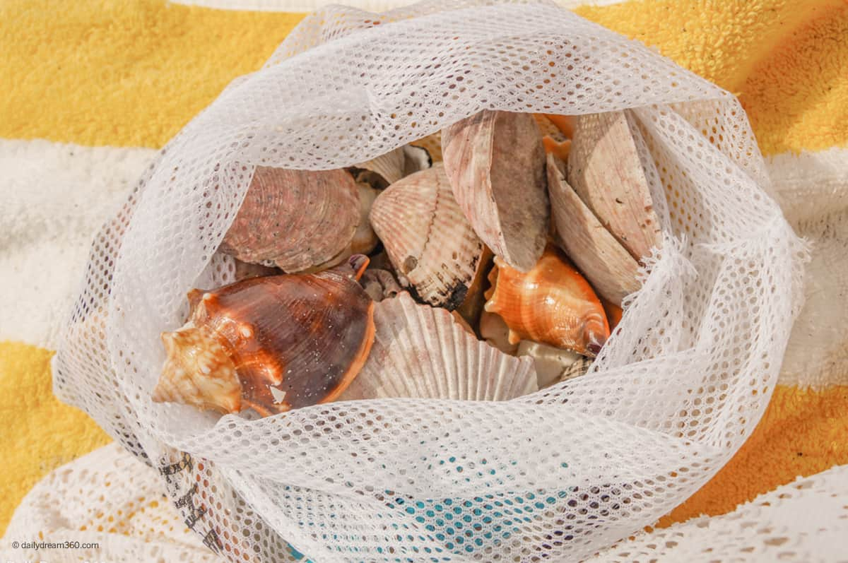 What You Need to Know About Shelling on Sanibel Island