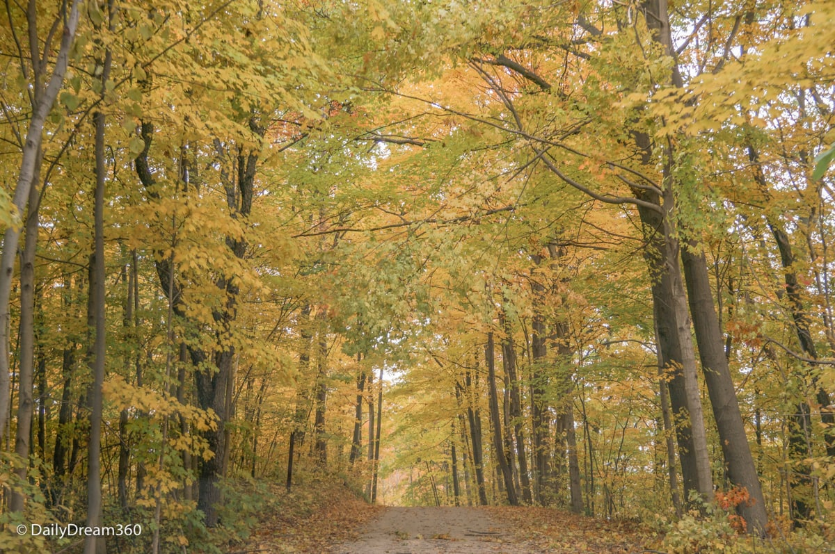 Back road in Sarnia Lambton with fall trees surrounding road