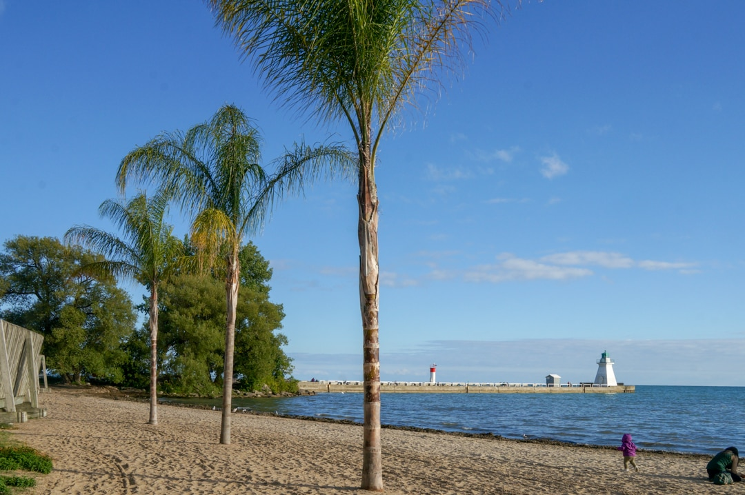 Palm trees on Port Dover beach Ontario