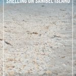 Beach filled with small shells on Sanibel Island Florida
