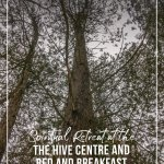 Looking up at tree during forest bathing at the Hive Centre and Bed and Breakfast