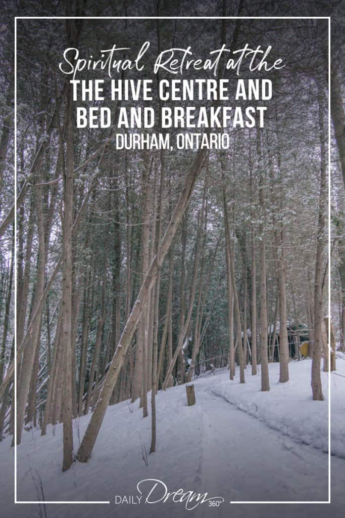 Snow falls in forest next to the Hive Centre and Bed and Breakfast in Durham Ontario