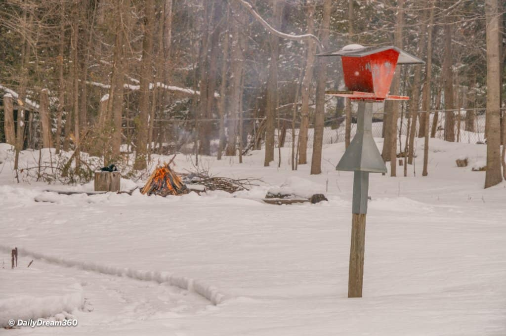 Campfire in background and bird feeder at the Hive Centre Orno Ontario