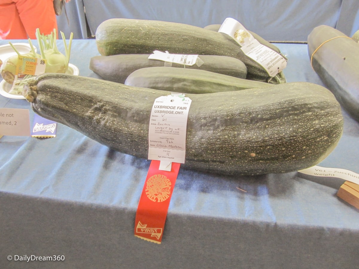 Vegetable competition at Uxbridge Fall Fair