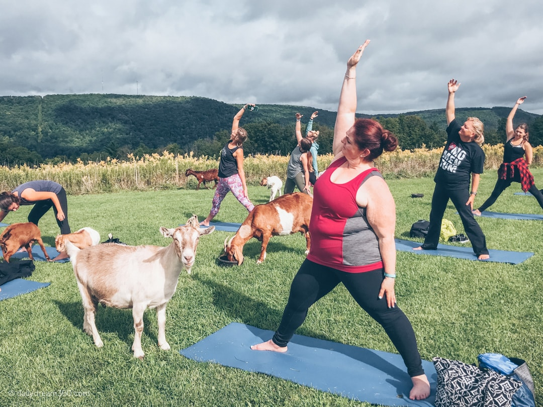 Goats look on during yoga class at ZiegenVine Homestead