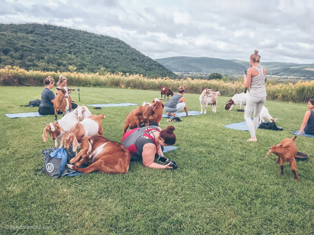 Goats party on yoga mat with Sharon Mendelaoui