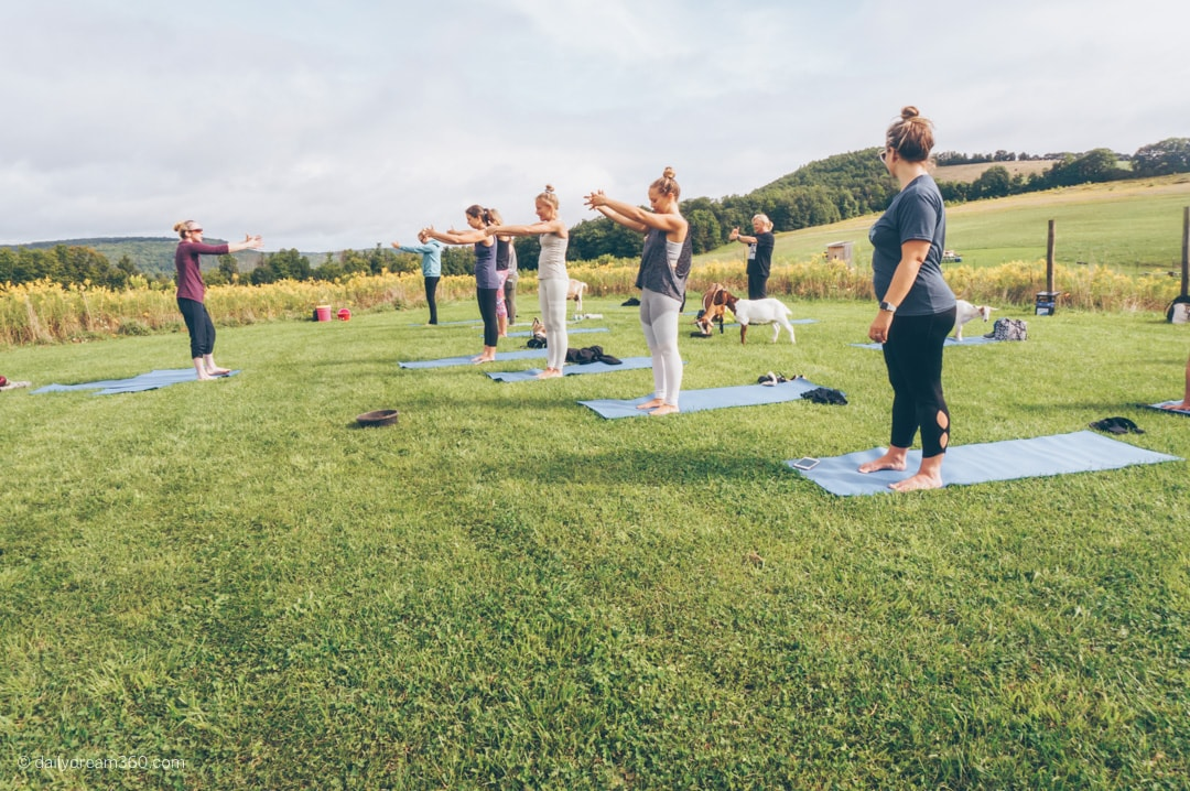 goat yoga class on grass field